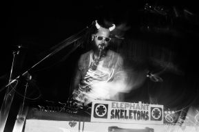 Elephant Skeletons live Photo by Sean Snow Photography
